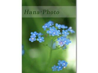 1466) 青い花(忘れな草、ヤグルマギク、ツルニチソウ、シラーカンパニュラータ、丁子草)    ポストカード5枚組の画像