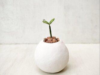 5638.bud 粘土の鉢植えの画像