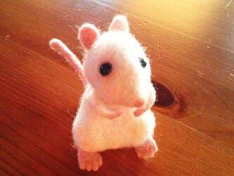 リアルマウス 1匹♪の画像