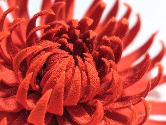古布 菊のコサージュ(乱菊)の画像