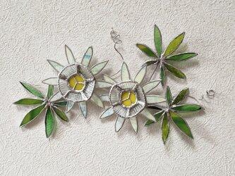 トケイソウの壁飾りの画像