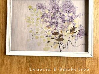 ルナリアとスモークツリーのトレーシングポスターの画像