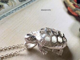 月を秘めた亀(ムーンストーン)の画像