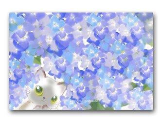 「お願いがあるんだけど・・・」 紫陽花 猫 ほっこり癒しのイラストポストカード2枚組No.1367の画像