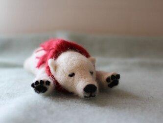 お昼寝シロクマの画像