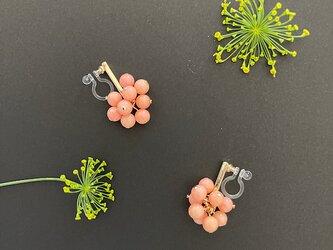 Dill flower -----* サーモンピンク *-----の画像