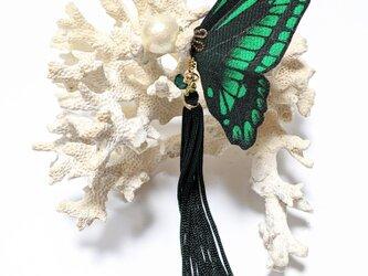 蝶のピアス(大)アオスジアゲハの画像