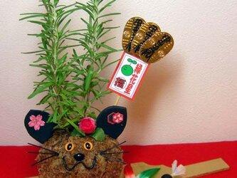 猫とパンダの苔玉の画像