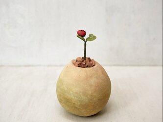 5739.bud 粘土の鉢植えにてんとう虫の画像