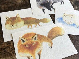 ポストカード『世界のキツネ』4種類セットの画像