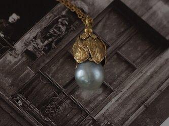 南の海へ 南洋白蝶真珠の画像