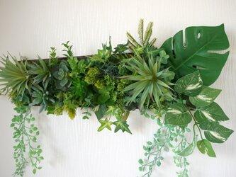 光触媒加工 リモート背景  多肉植物 大きめウォールグリーンの画像