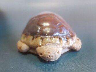 ちびカメ*茶カメの画像