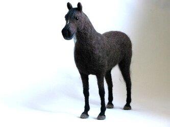 黒鹿毛の馬の画像