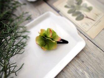 スリーピン ■ 濃密に花開く 紫陽花 ■ #125 グリーンレッドの画像