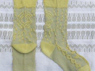 絹の靴下 snow forest 新緑の画像