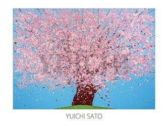 厳選されたA4ポスター:桜の画像