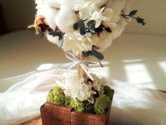 cotton topiaryの画像