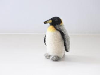 キングペンギンの画像