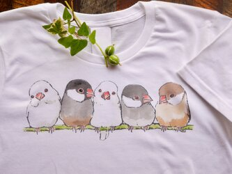 ふんわり文鳥 Tシャツの画像