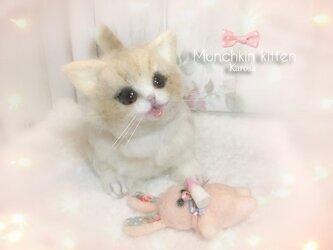 マンチカン 子猫 可動 猫 ぽてぽて ころころ むちむち 羊毛フェルト アートドールの画像