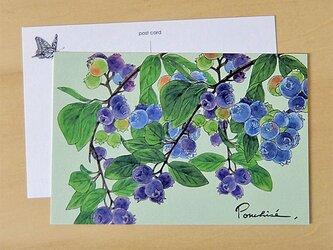 ポストカード ブルーベリーの画像