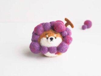 【受注製作】なりきりぶどうのまゆ柴犬(赤柴・黒柴・白柴) 羊毛フェルトの画像