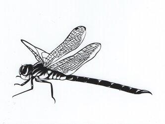額装済み切り絵原画・蜻蛉の画像