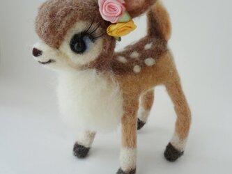 バンビちゃんの画像