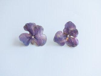 【紫陽花 ピアス】生花のアクセサリーの画像
