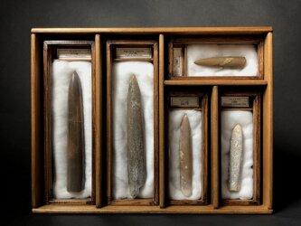イカの箱。(ベレムナイトの化石標本セット)の画像