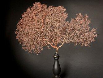 軟質珊瑚の一種の台座付き標本その三。の画像
