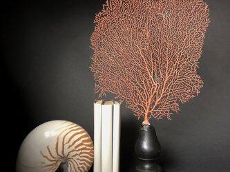 軟質珊瑚の一種の台座付き標本その四。の画像