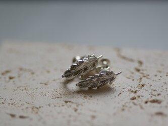 【charm】silver leaf earringsの画像