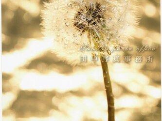 キラキラをバックにタンポポの綿毛(A4サイズ) LP0535-A4の画像