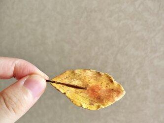 5978.bud 落ち葉の画像