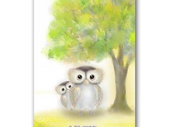 """「秋の""""びっくり目""""にビックリ」秋 ミミズク ほっこり癒しのイラストポストカード2枚組No.1431の画像"""