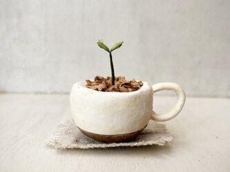 6002.bud 粘土の鉢植え マグカップの画像