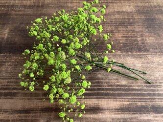 花材*よりどり5点1500円の画像