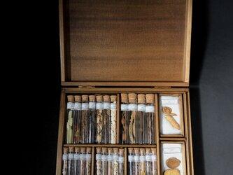 植物標本箱(76種)。の画像