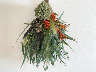 オータムスワッグ(秋色紫陽花)の画像