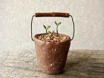 6093.bud 粘土の鉢植え バケツの画像