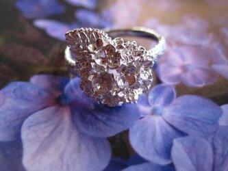 紫陽花リングの画像