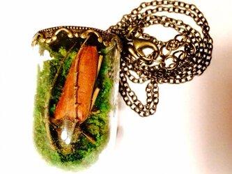 カミキリムシ標本ネックレスllの画像