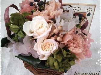 white roseの画像