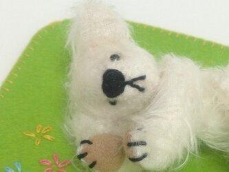 Spring Teddyの画像