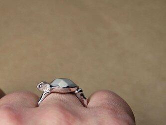 【受注製作】ウミガメの画像
