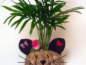 猫の苔玉「ねこっぴ」の画像