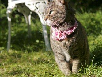 猫の首輪の画像