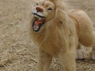 羊毛フェルト 「ライオンの雄叫び」の画像